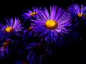 Tapeta Květiny :-) 2