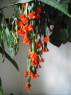 Tapeta kvetocí kaktus