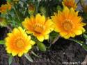 Tapeta Květy