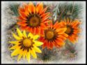 Tapeta kvety 3
