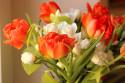 Tapeta Kytice s tulipány