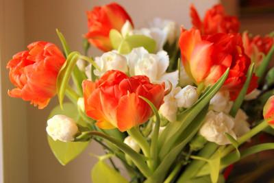Tapeta: Kytice s tulipány