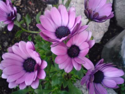 Tapeta: kytička z Letné