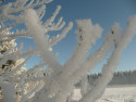 Tapeta ledové jehličky