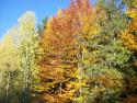 Tapeta Les na podzim