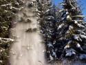 Tapeta Les v zimě