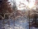 Tapeta Les v zimě 2