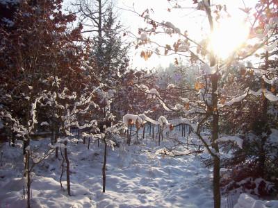 Tapeta: Les v zimě 2