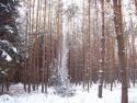 Tapeta Les v zimě 3