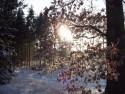 Tapeta Les v zimě 4