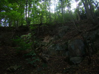 Tapeta: les zákruhy