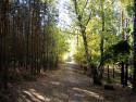 Tapeta lesni cesta na Hracholuskach