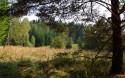Tapeta Lesní mýtina