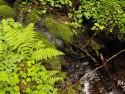 Tapeta Lesní potůček