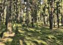 Tapeta Lesní procházka 01