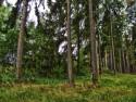 Tapeta Lesní procházka 02