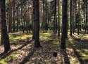 Tapeta Lesní procházka 04