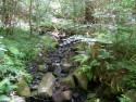 Tapeta Lesní zátiší
