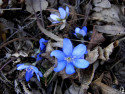 Tapeta Lesní Květinka