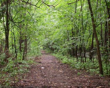 Tapeta: Lesní porost