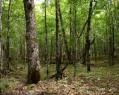 Tapeta Lesní porost 3