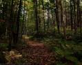 Tapeta Lesní porost 7