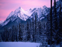 Tapeta Lesní porost horský 15