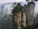Tapeta Lesní porost horský 19