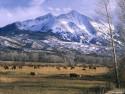 Tapeta Lesní porost horský 2