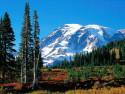 Tapeta Lesní porost horský 20