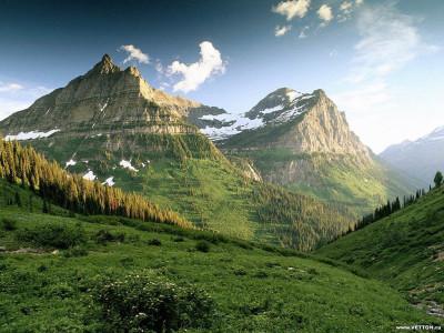 Tapeta: Lesní porost horský 3