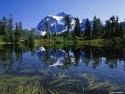 Tapeta Lesní porost horský 4