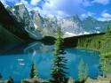 Tapeta Lesní porost horský 5