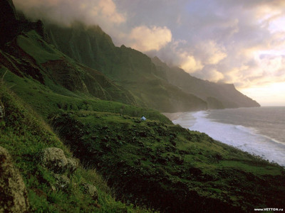 Tapeta: Lesní porost horský 6