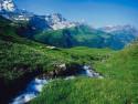 Tapeta Lesní porost horský 7