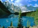 Tapeta Lesní porost horský 8