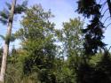 Tapeta Lesy nad Kunčinou 01
