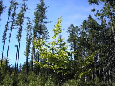 Tapeta: Lesy nad Kunčinou 03