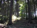 Tapeta Lesy nad Kunčinou 04