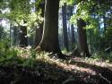 Tapeta Lesy nad Kunčinou 05