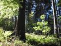 Tapeta Lesy nad Kunčinou 06