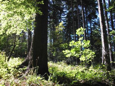 Tapeta: Lesy nad Kunčinou 06
