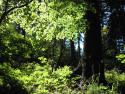 Tapeta Lesy nad Kunčinou 07