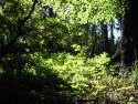 Tapeta Lesy nad Kunčinou 08