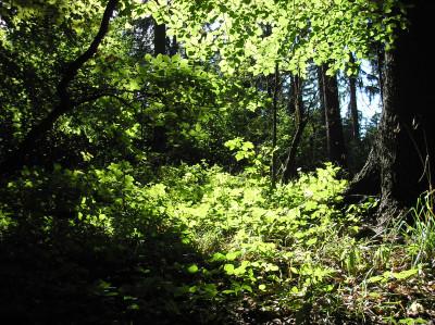 Tapeta: Lesy nad Kunčinou 08