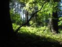 Tapeta Lesy nad Kunčinou 09