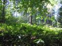 Tapeta Lesy nad Kunčinou 10