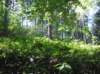 Tapeta: Lesy nad Kunčinou 10