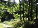 Tapeta Lesy nad Kunčinou 11