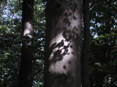 Tapeta: Lesy nad Kunčinou 12
